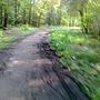 W lesie mokro, trochę błota, ale mozna spokojnie przejechać